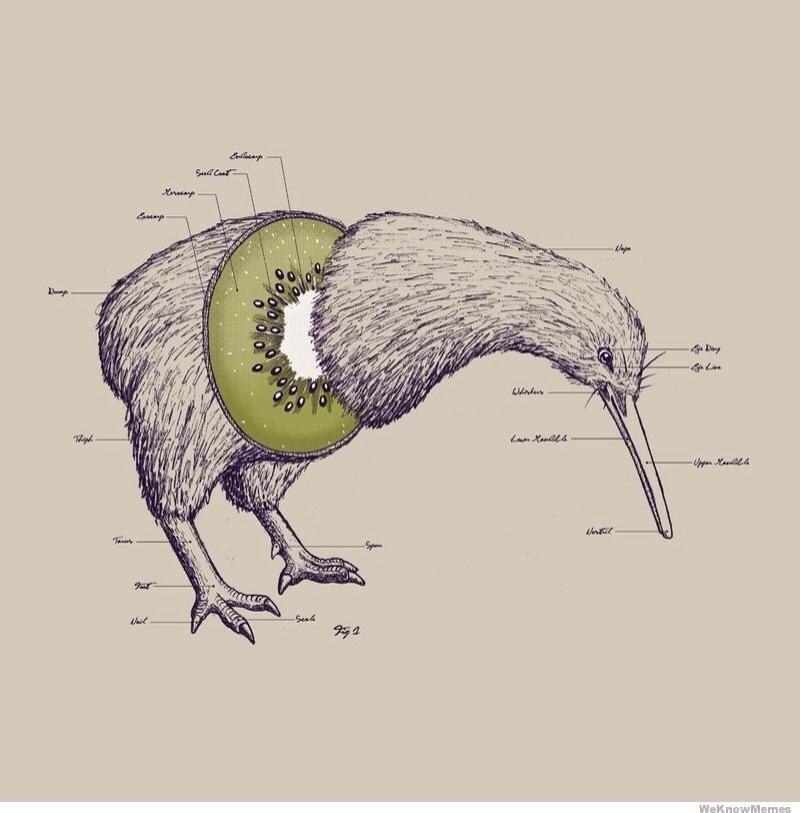 kiwi fruit | Molto Molto