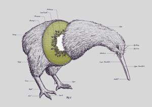 Kiwi diagram