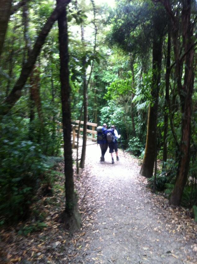 Rimutakas forest park