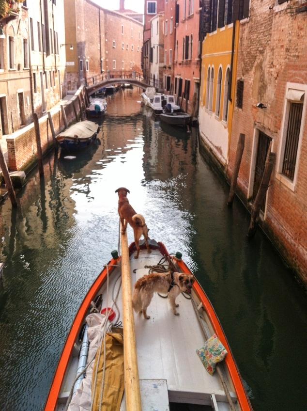 Venice, dogs on a boat